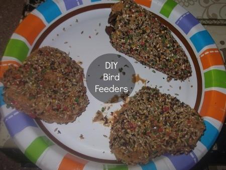 Bird Feeder DIYs