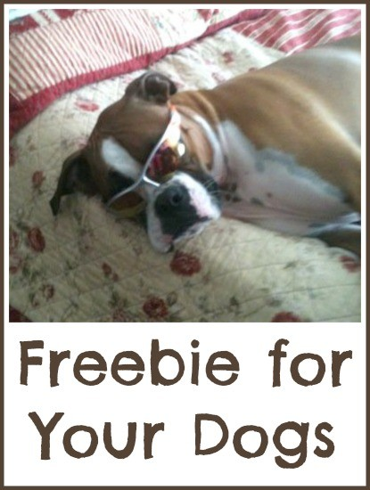 Freebie for Your Dog