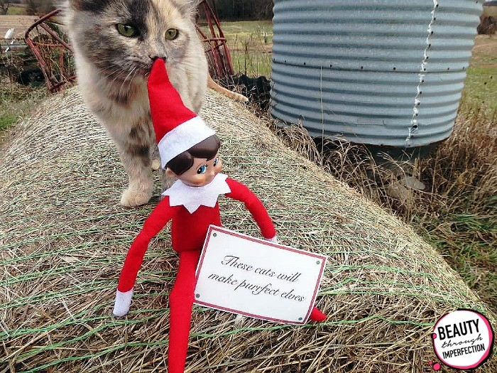elf on the shelf outdoors