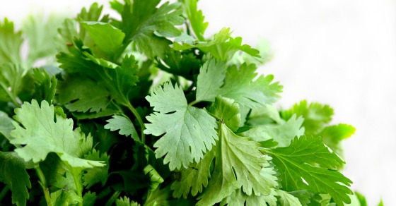 Cilantro should only be given to kids age 7 and up