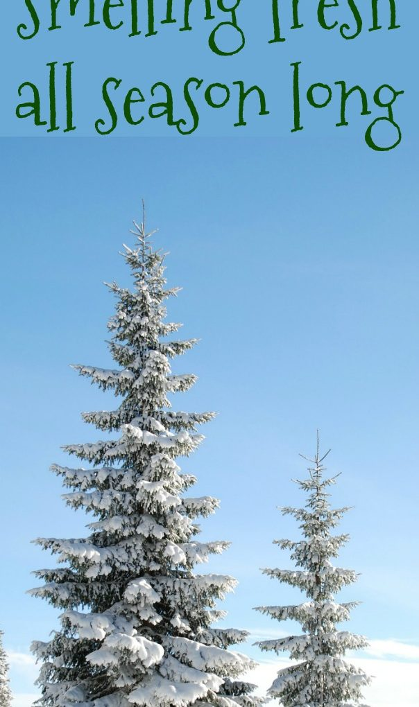 How to keep your house smelling fresh all season long